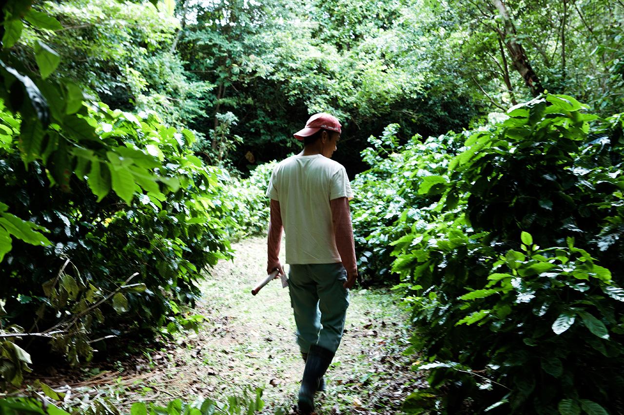 日本国内でコーヒーを作る、農家が集まる